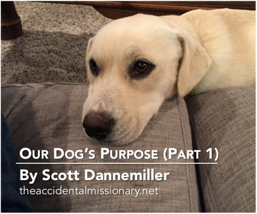 am-dogs-purpose-part-1